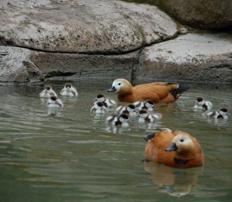 Keçiören Evcil Hayvanlar Parkı